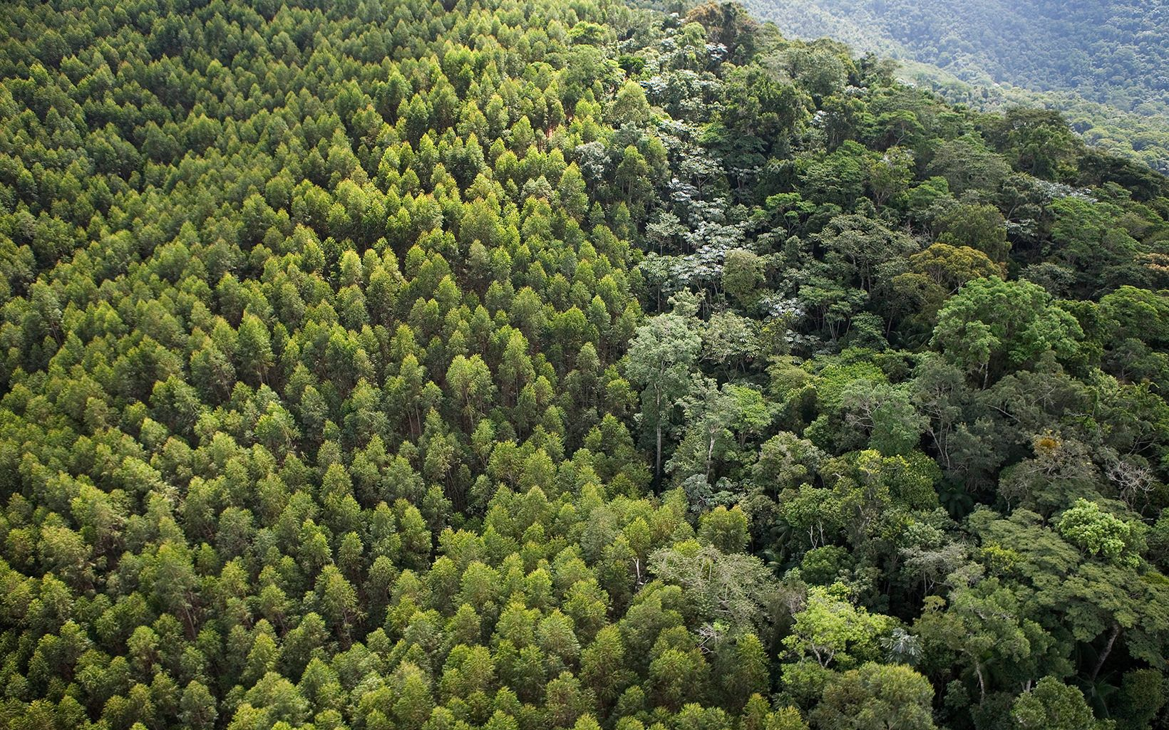 Aerial view of contrasting forest of planted eucalyptus (on left) and natural forest; near the Cachoeira Reservoir.