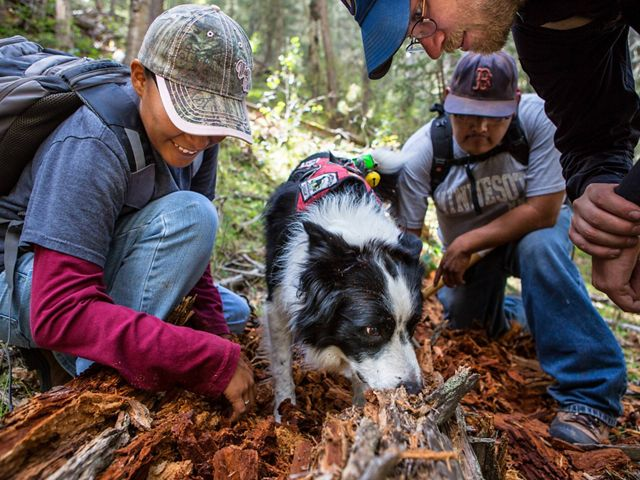 researchers watch as border collie sniffs ground for salamander scent