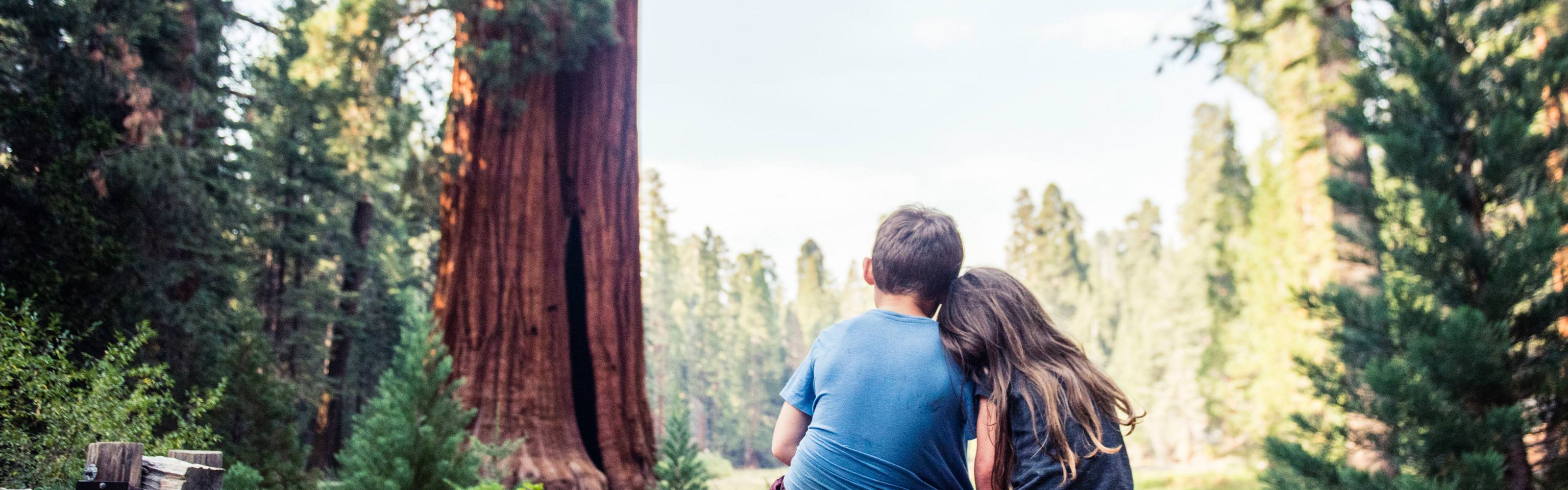 Two kids viewed from behind, sitting on a bench together in a redwood forest.