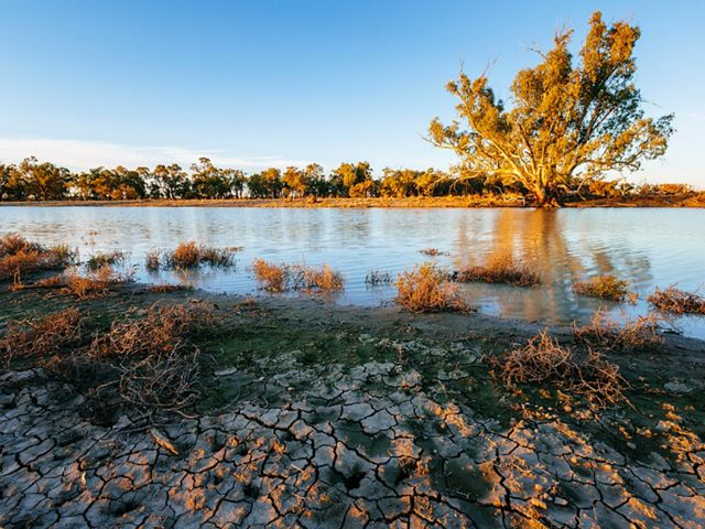 A Red Gum tree receives much needed moisture from the water transfer into a previously dry watercourse in the Carrs, Capitts and Bunberoo (CCB) Creeks system in Australia.