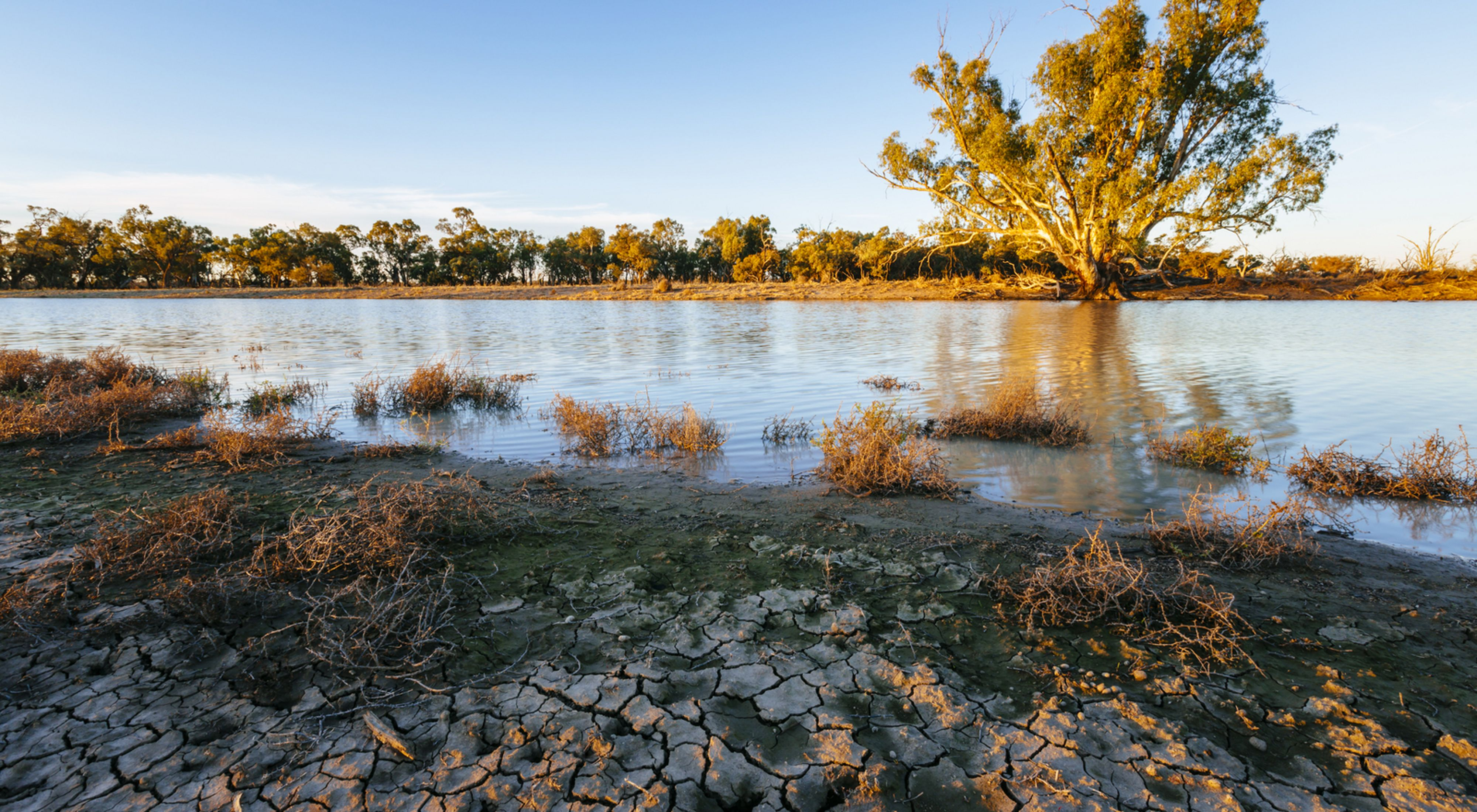 A Red Gum tree receives much needed moisture from the water transfer into a previously dry watercourse in the Carrs, Capitts and Bunberoo (CCB) Creeks system.