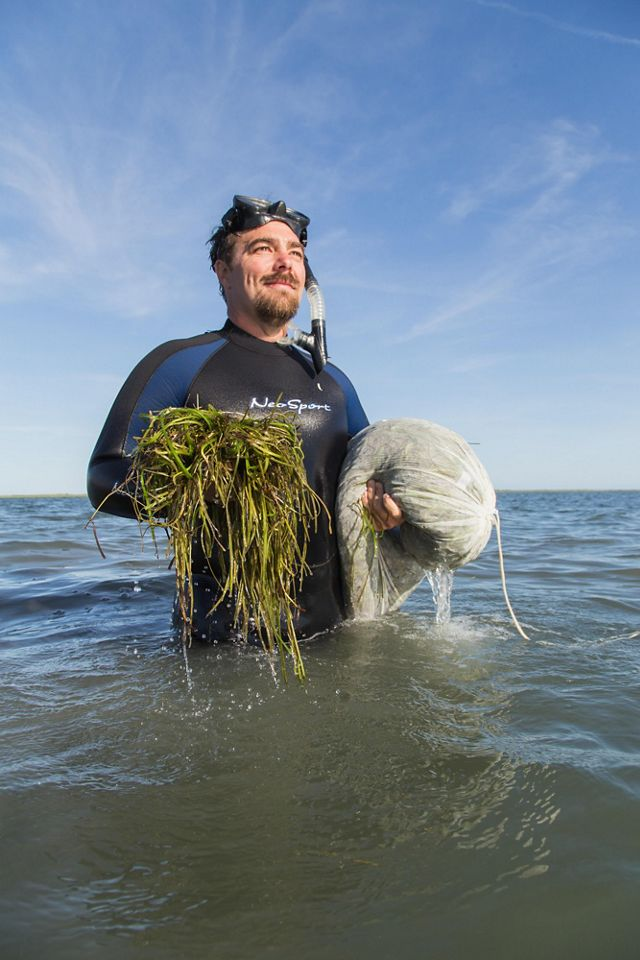 Bo Lusk stands in the water holding eelgrass