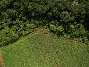 borders corn fields in the ejido of San Agustin, Yucatan.