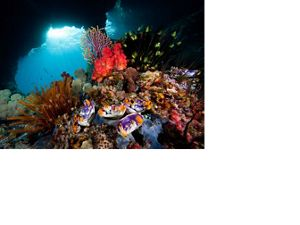 """Soft Corals and """"Windows"""", photographed underwater in West Papua Province, Indonesia."""