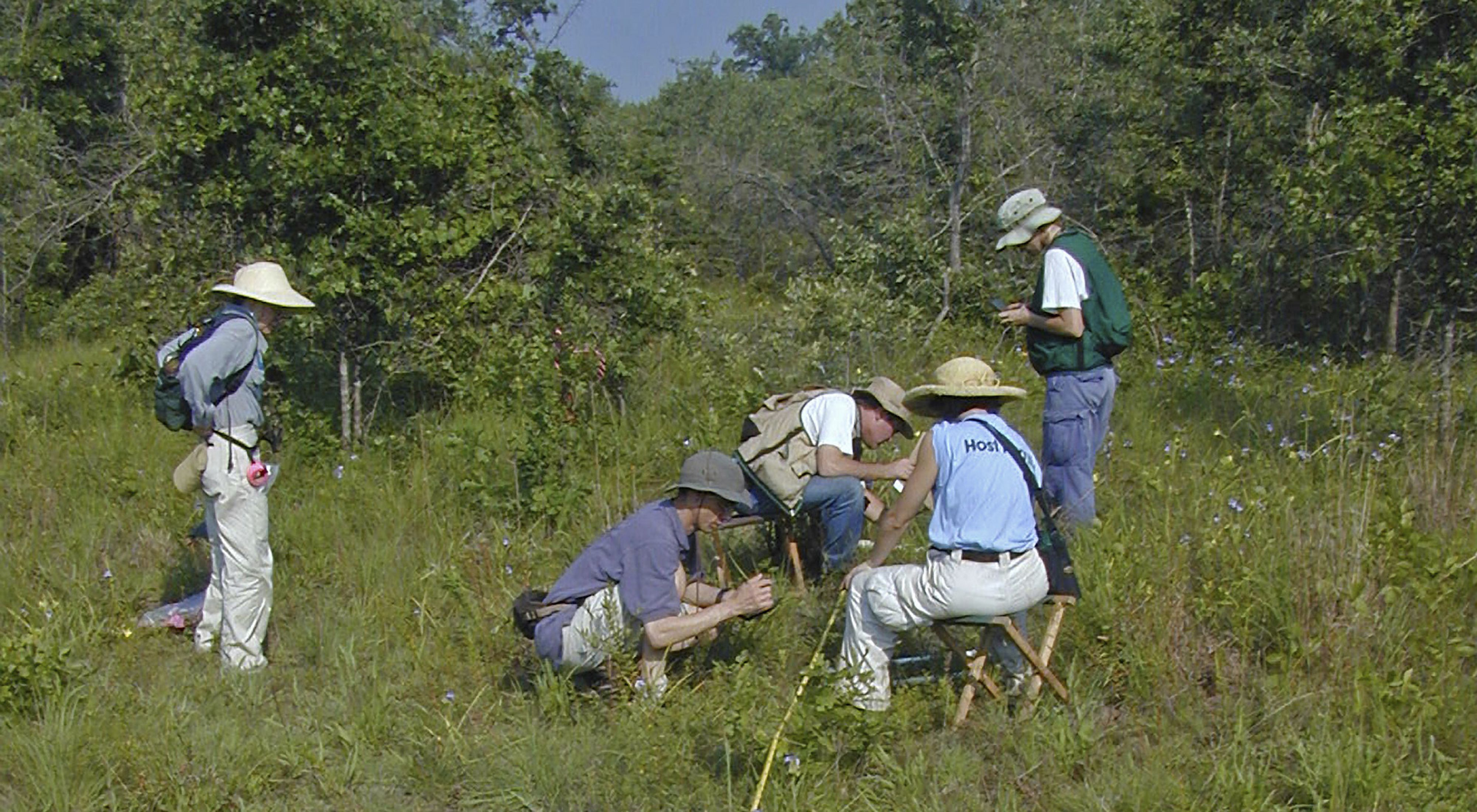 Conservancy scientists, volunteers and partners monitoring plants at Miller County Sandhills Natural Area.