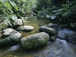 A freshwater mountain stream in Mexico's Reserva de la Biosfera la Sepultura in the Sierra Madre mountains near Tres Picos; Chiapas, Mexico