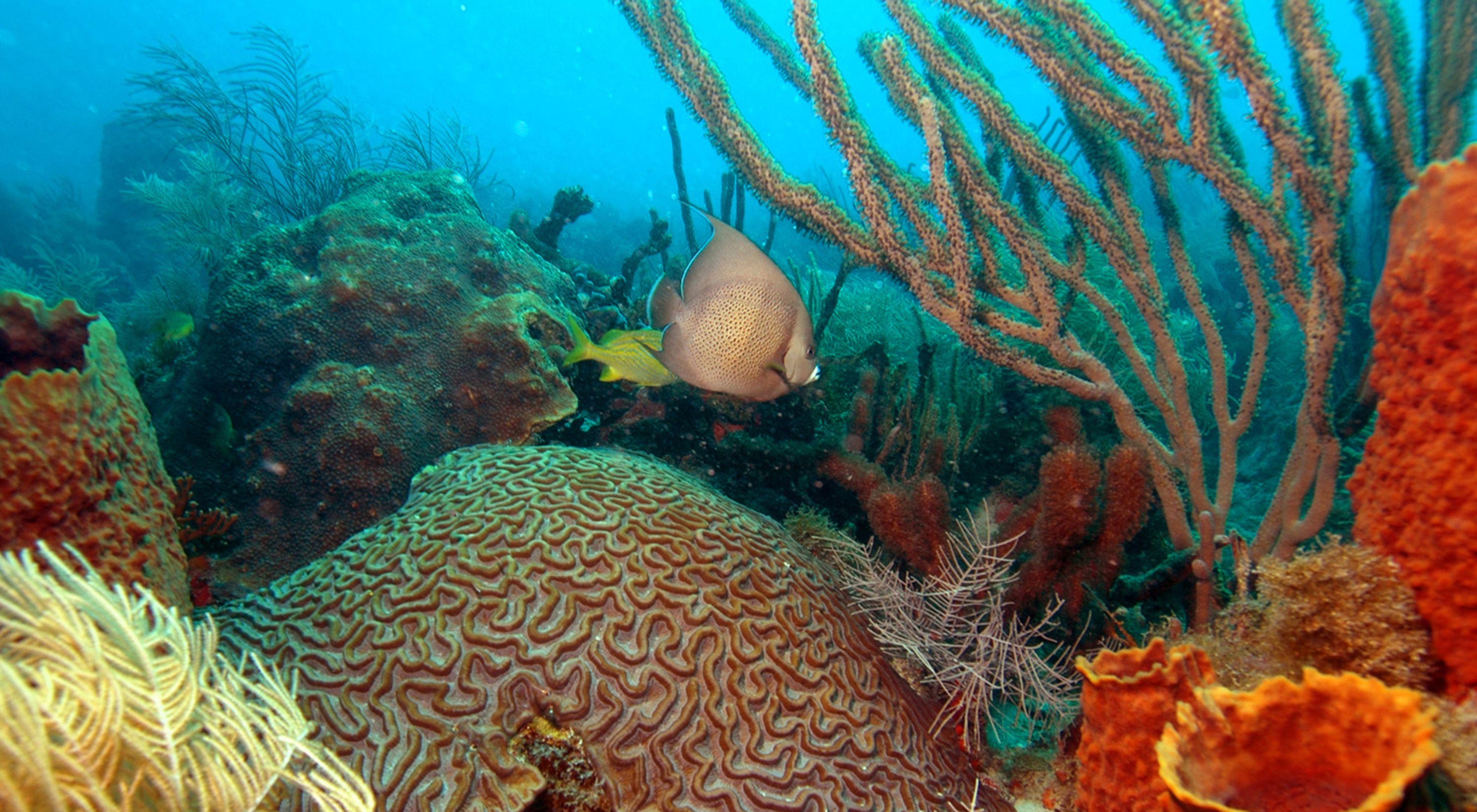 Reef Stewardship 640x400