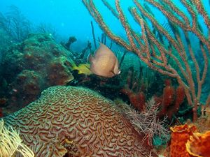 Florida Keys Coral Reef with fish