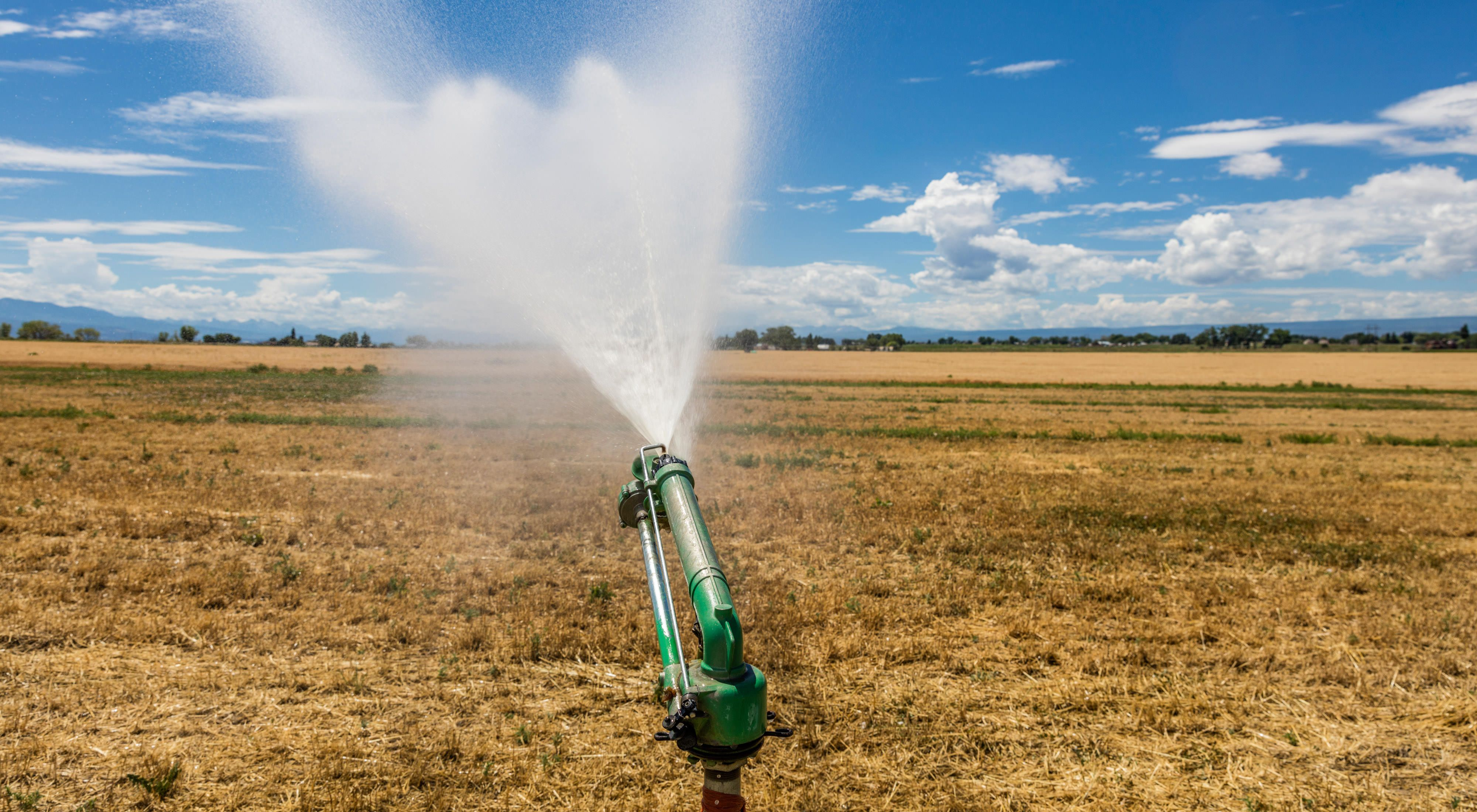 A large, green sprinkler sprays water over a brown fiel