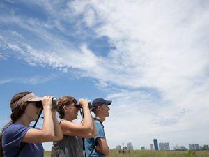 Three volunteers in Chicago watch purple martins