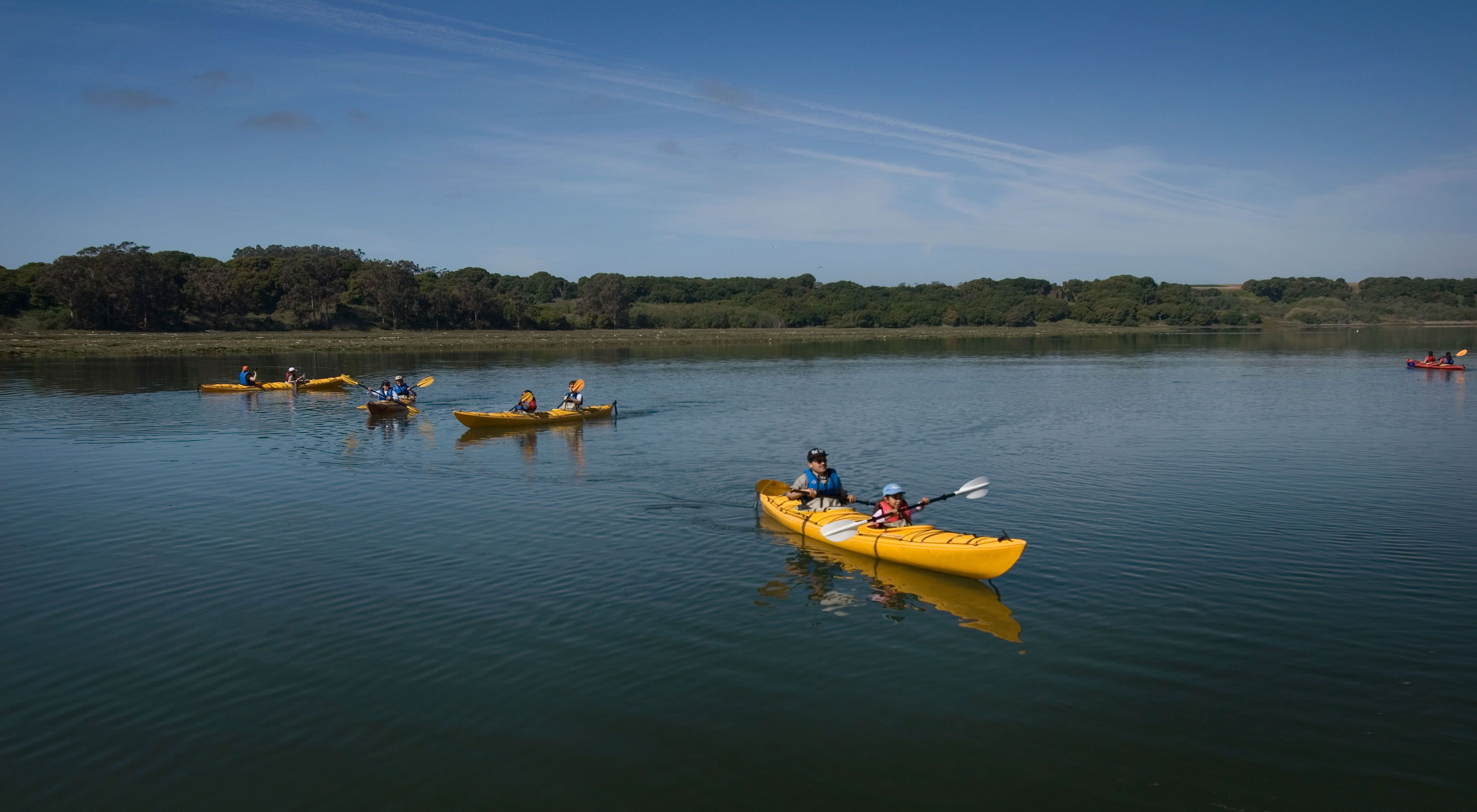 Elkhorn Slough harbors the largest tract of tidal salt marsh in California outside of San Francisco Bay.