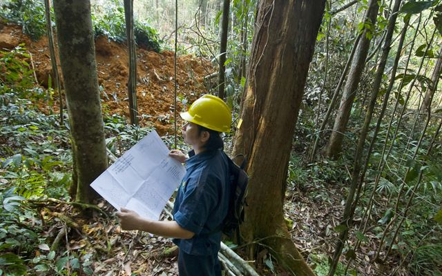 A forest planner tags trees for reduced-impact logging practices in Borneo, Indonesia.
