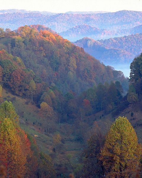 The forests of the Clinch Valley help filter and protect the last free-flowing tributaries of the Tennessee River system.