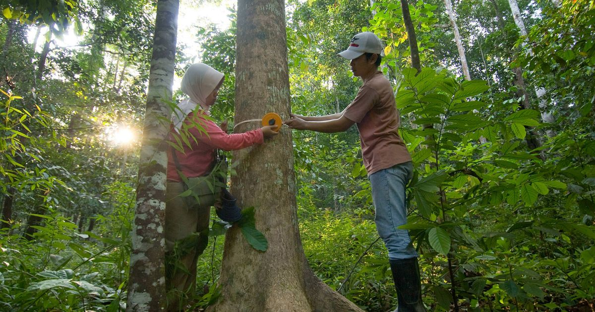 Carbon monitoring in forest one of the land use types that WAC (ICRAF (now World Agroforestry Centre or WAC) carbon measurement project).