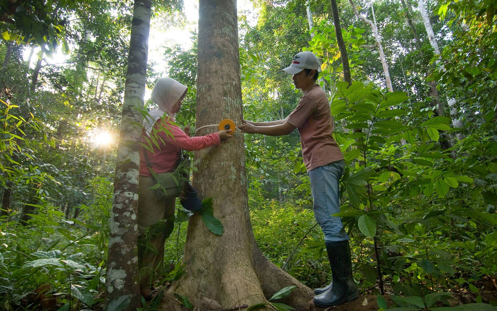 Carbon monitoring in forest one of the land use types that WAC (ICRAF (now World Agroforestry Centre or WAC) carbon measurement project) is using to determine the carbon load