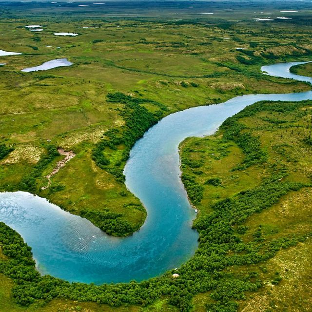 The gravel bottoms and braided channels of rivers leading into Iliamna Lake in southwest Alaska are ideal for the many king salmon that spawn in the lake's waters.