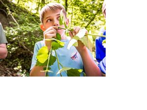 A boy sniffs aromatic invasive garlic mustard leaves during a bioblitz event.
