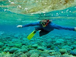 A snorkeler explores a coral reef in the coastal waters of Micronesia.