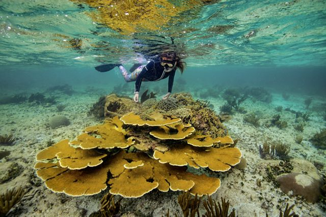 Working with SwissRe to insure coral reefs