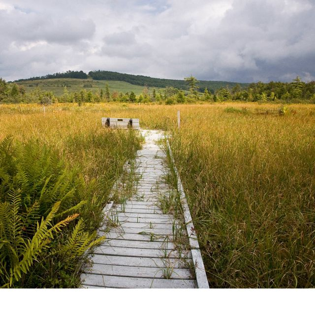View of Cranesville Swamp Preserve's boardwalk