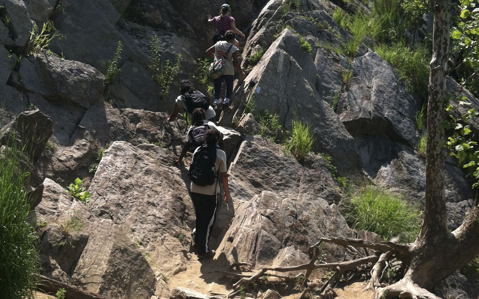 "LEAF interns ascend the difficult ""traverse"" section of Bear Island's Billy Goat trail."