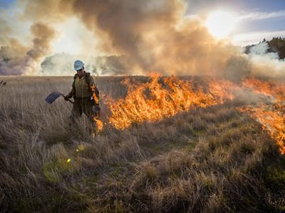 A prescribed burn being conducted in the Willamette Valley of Oregon.