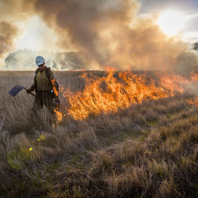 The Nature Conservancy conducts a prescribed burn in Willamette Valley, Oregon. Burns help to promote regeneration of native species in this historically fire adapted ecosystem.