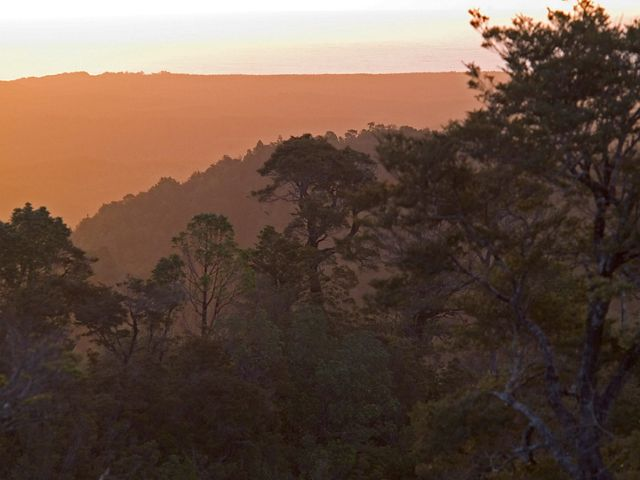 Sunset on evergreen temperate forest overlooking the Pacific Ocean at The Nature Conservancy's Reserva Costera Valdiviana, (Valdivian Coastal Reserve), a 147,500 acre site comprising temperate rainforest and 36km of Pacific coastline south of Valdivia, Chile.