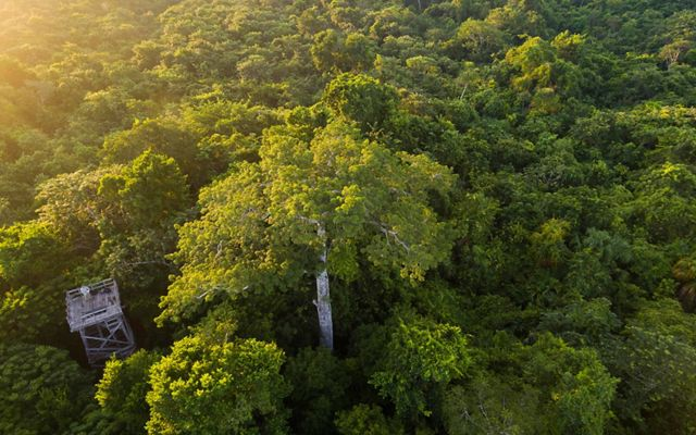 Aerial views of the hardwood forest around the logging community of Noh Bec, Quintana Roo. credit: