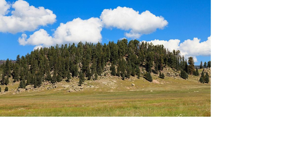 Hillock at Valles Caldera National Preserve.