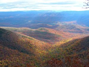 Overlook view of a wide forested valley. The afternoon sun creates shadows across the mix of green and gold leaves. Blue tinged mountains rise in the distance.