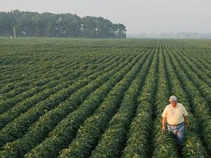 Farmer standing in his field in Mississippi.