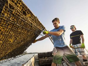 Workers at Rappahannock Oyster Company in Virginia