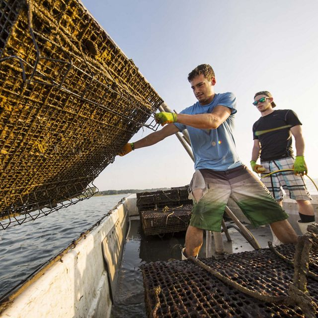 Two men stand on a boat. One holds an oyster cage over