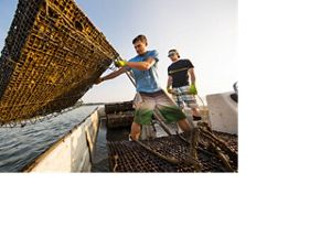 Rappahannock Oyster Co maintains its own oyster farms in the waters around its Merroir restaurant in Topping, Virginia.