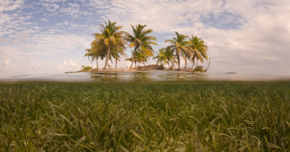 Underwater shot of seagrass with a tropical island part