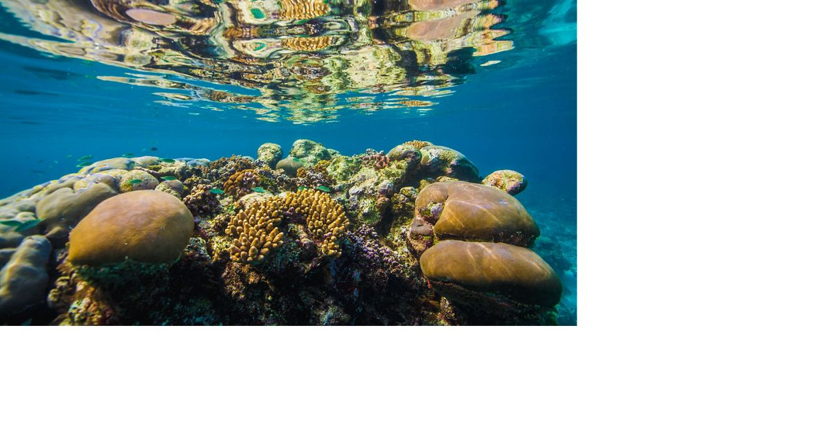 Coral reef in Solomon Islands