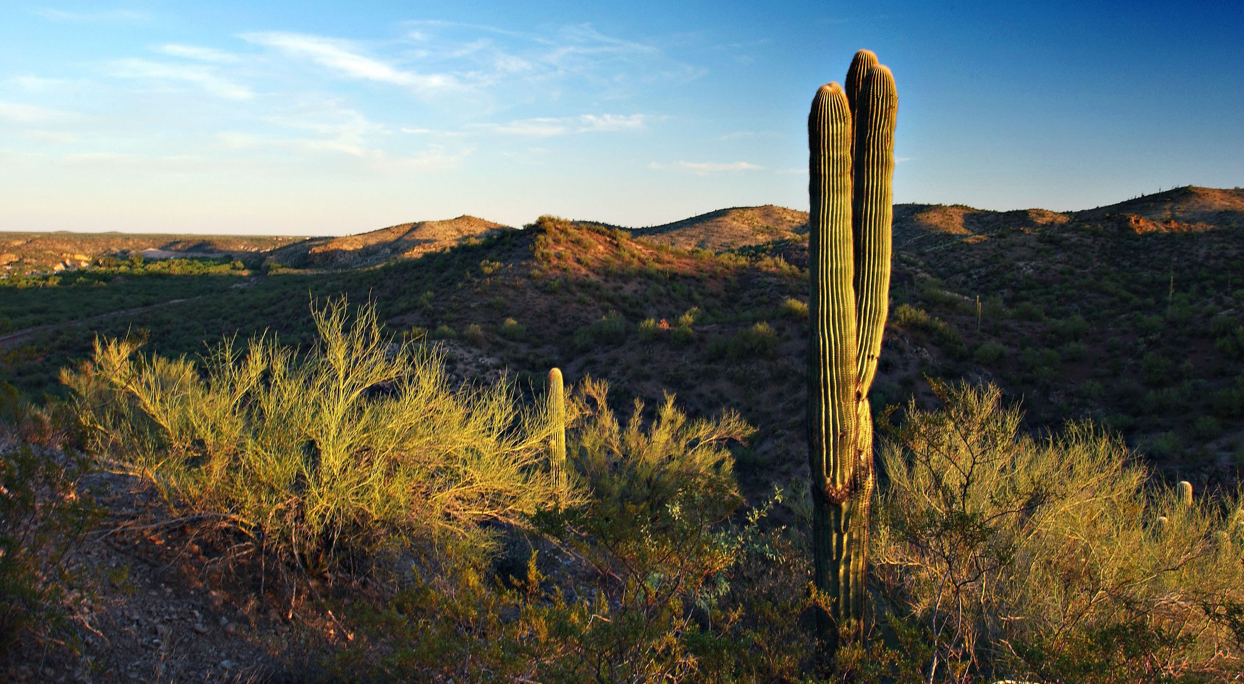 Sunset view of a desert landscape with a cactus in the