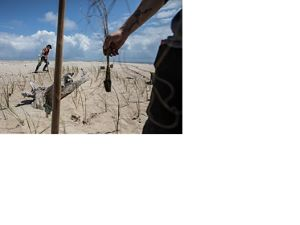 Gulf Corps volunteers planting sea oats