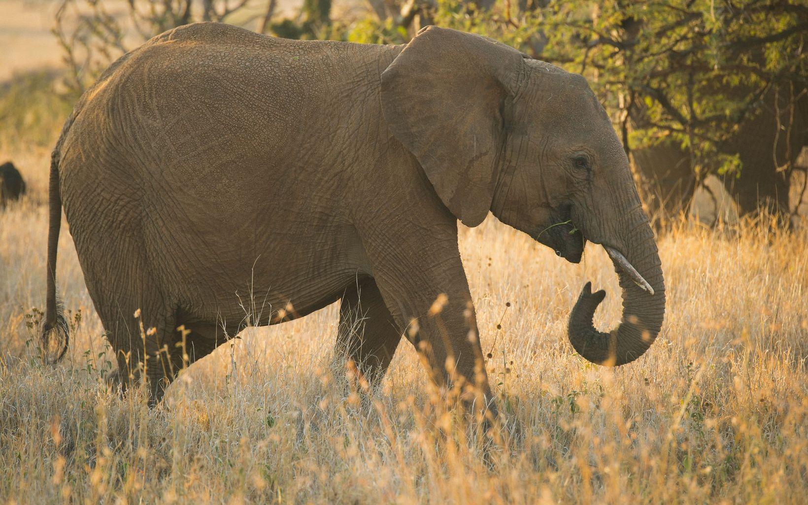 at the Lewa Wildlife Conservancy in Northern Kenya.