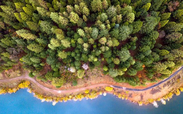 Aerial view of evergreen and deciduous trees along the coast of Northern California.