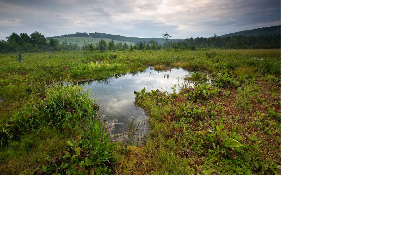 The permanent cool, wet setting of the preserve has created a peat bog – consisting of wet spongy ground and decomposing vegetation with poor drainage.