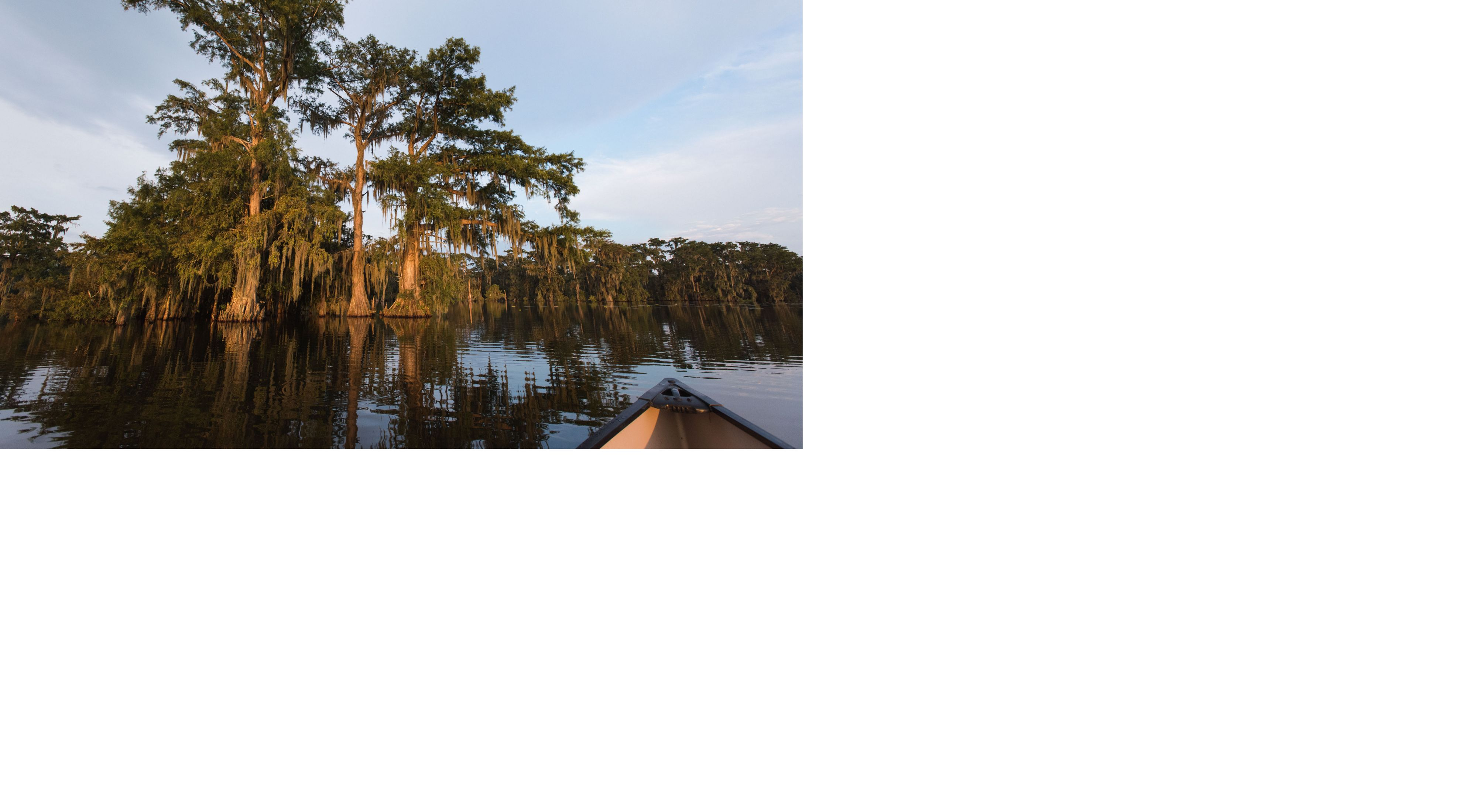 Cypress trees line the banks of Lake Martin, Louisiana, adjacent to Cypress Island Preserve which is owned and managed by TNC.