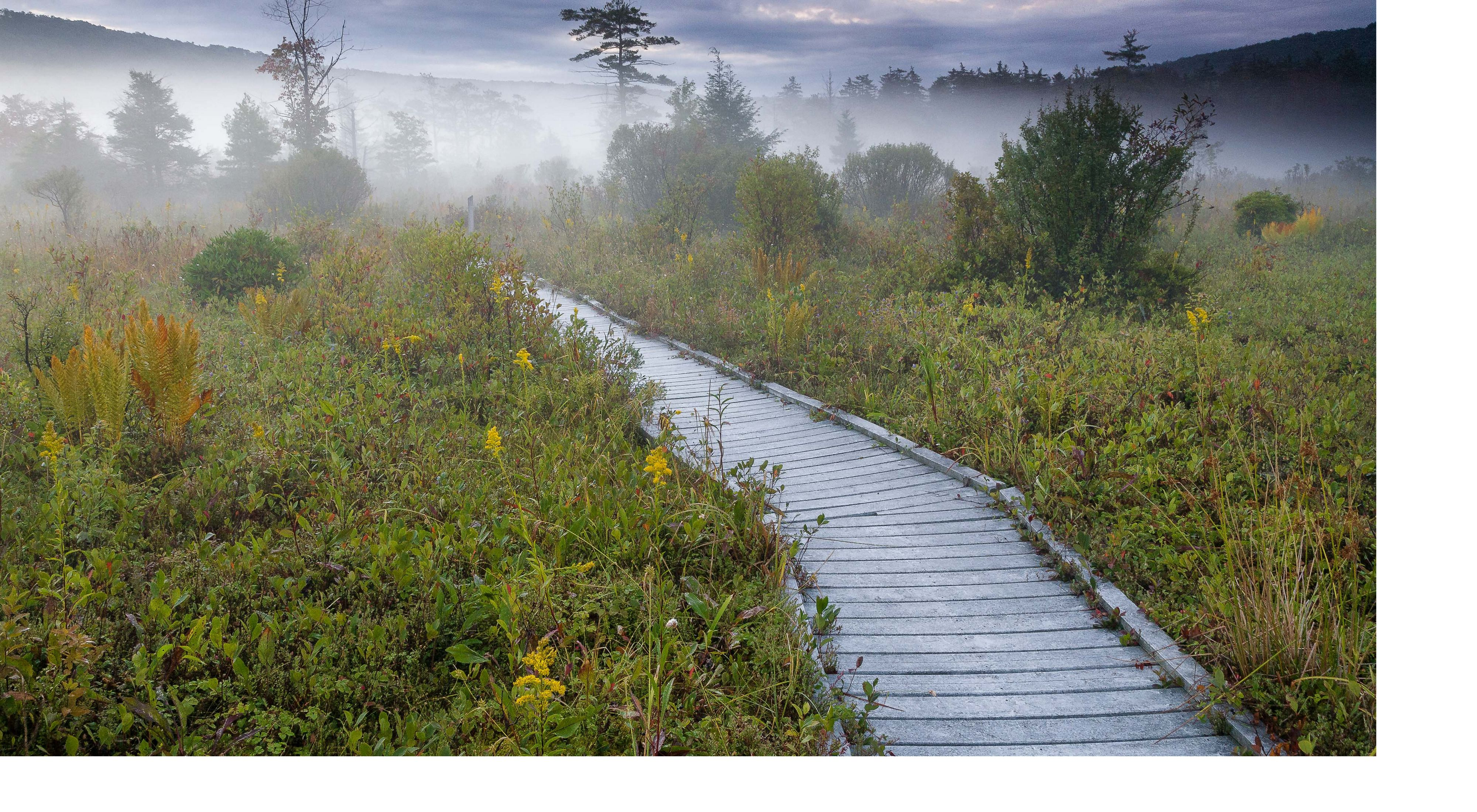 Boardwalk through the wetlands of The Nature Conservancy's Cranesville Swamp Preserve.