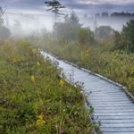 Cranesville boardwalk in the mist