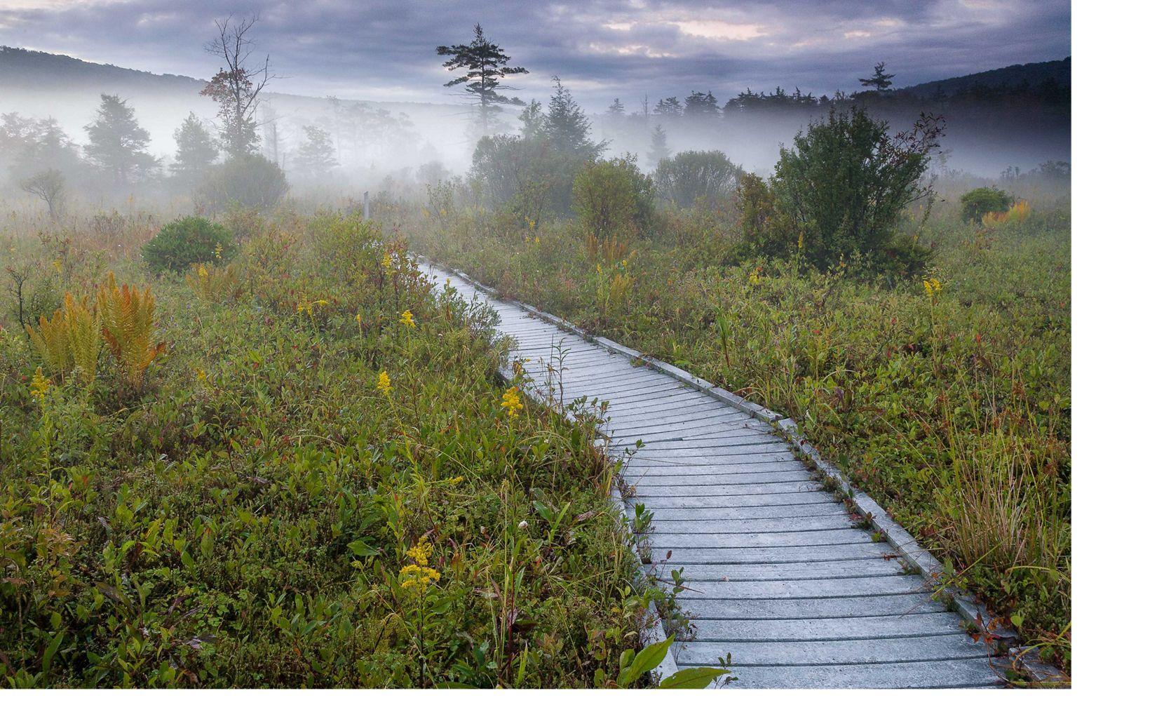 Boardwalk through the wetlands of The Nature Conservancy's Cranesville Swamp Preserve in West Virginia.