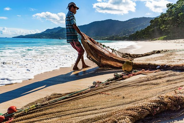 Mackrel fishermen fish along the shore with small boats and seine nets, trapping fish against the beach and hauling the catch up onto the sand, Seychelles.