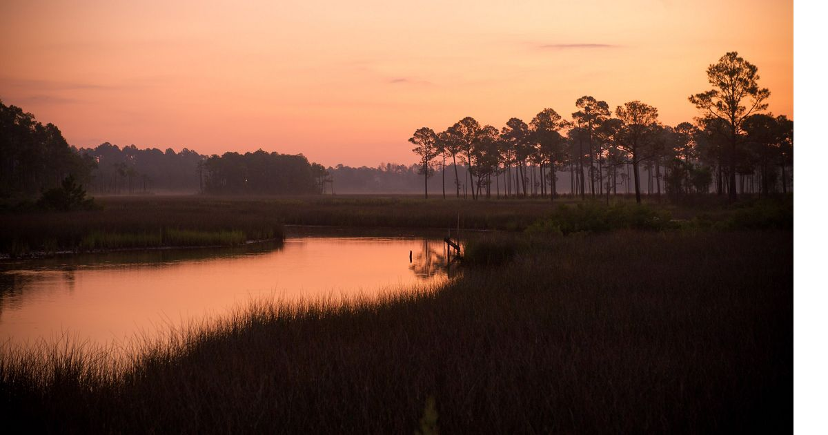 Gulf of Mexico coastal wetlands along Mobile Bay, Alabama.