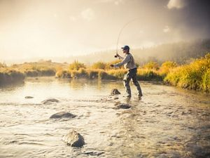 A park visitor fly fishing in the Big Thompson River in Moraine Park at dawn in Rocky Mountain Park, Colorado.