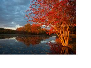 Fall colors at Victory Lakes, New Jersey.